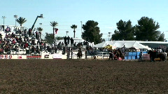 Rodeo Calf Roping Stock Footage