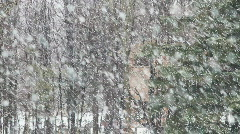 Large Snowflakes Snowing In The Forest With Trees In The Background Stock Footage