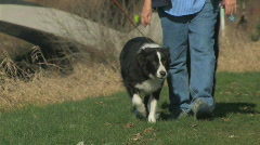 Stock Video Footage of Border collie walking with two men in Park