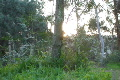 Time Lapse Forest Sunlight SD 01 x20 Footage