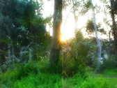 Stock Video Footage of Time Lapse Forest Sunlight SD 02 x30 VJ Loop