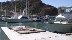 Seagulls and Pelicans Feeding in Marina of San Carlos, Mexico Stock Footage