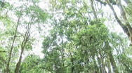 Jungle view Stock Footage