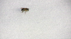 Bee cleansing flight - stock footage
