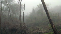 Pan of Forest Destruction near Haiti - stock footage