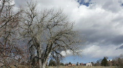 Time lapse of Storm Clouds behind an old Cottonwood Tree Stock Footage