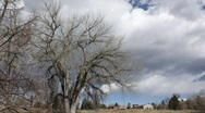 Stock Video Footage of Time lapse of Storm Clouds behind an old Cottonwood Tree