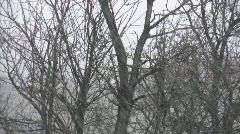 Cold weather   Full HD 1080p Stock Footage