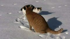 Cats play in the snow Stock Footage