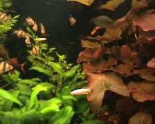aquarium - stock footage