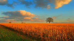 Sunset over lonely tree and fields hdr time lapse Stock Footage