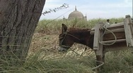 Stock Video Footage of Donkey on a Farm in Rural Pakistan - 2