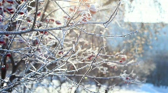 Frosty day. - stock footage