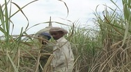 Stock Video Footage of Farmers Harvesting Hay in Rural Sindh, Pakistan