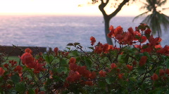Flowers at sunset - Hawaii Stock Footage