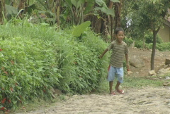 Indonesia children on bicycles in a plantation village  Stock Footage
