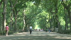 NYC Central Park ramblas day Stock Footage
