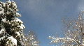 Winter Tree Branches 530 Footage