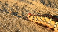 Big fat caterpillar Stock Footage