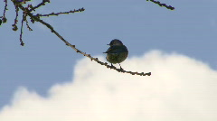 Bird in tree with clouds rolling by - stock footage