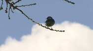 Stock Video Footage of Bird in tree with clouds rolling by
