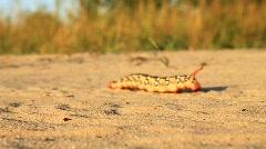 Big caterpillar Stock Footage