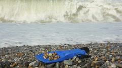flipper with seashells on pebble coast against sea surf wave - stock footage