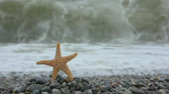 Sea star standing on pebble coast, sea surf wave in background Stock Footage