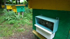 bees with honey coming to beehive on apiary, camera moving up - stock footage