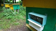 Bees with honey coming to beehive on apiary, camera moving up Stock Footage