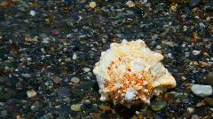 Sea surf wave washing away seashell lying on pebble beach Stock Footage