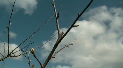 Branch Prune - stock footage