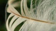 T170 Super macro telemacro feather micro Stock Footage