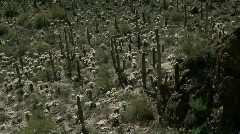 Saguaro National Park Stock Footage