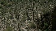 Saguaro National Park Stock Footage