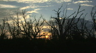 Stock Video Footage of Bayou Silhouettes Time Lapse - Louisiana - 04