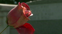 Cemetery Silk Rose to Grave Rack Focus Stock Footage