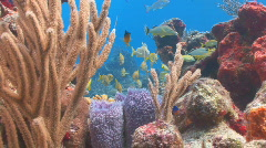 Coral and fish swimming short - stock footage