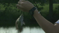 Pond Fishing - Bluegill Catch - 06 Stock Footage