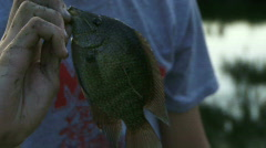 Pond Fishing - Bluegill Catch - 08 Stock Footage