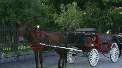 Horses and Buggies in French Quarter, New Orleans - 01 Stock Footage
