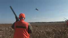 Pheasant Hunting - stock footage