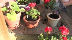 Planting Begonias Stock Footage