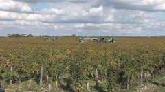 Wine Harvest in Bordeaux Stock Footage