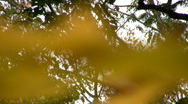 Autumn colours Stock Footage