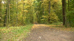 Autumn colours - path in a forest Stock Footage