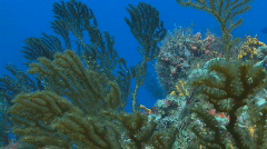 Coral branches pan 2 Stock Footage