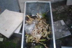 Skull, bones and voodoo in cemetery 4/12 Stock Footage
