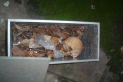 Skull, bones and voodoo in cemetery 7/12 Stock Footage