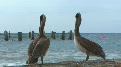 Pelicans standing on rock by sea from behind Stock Footage